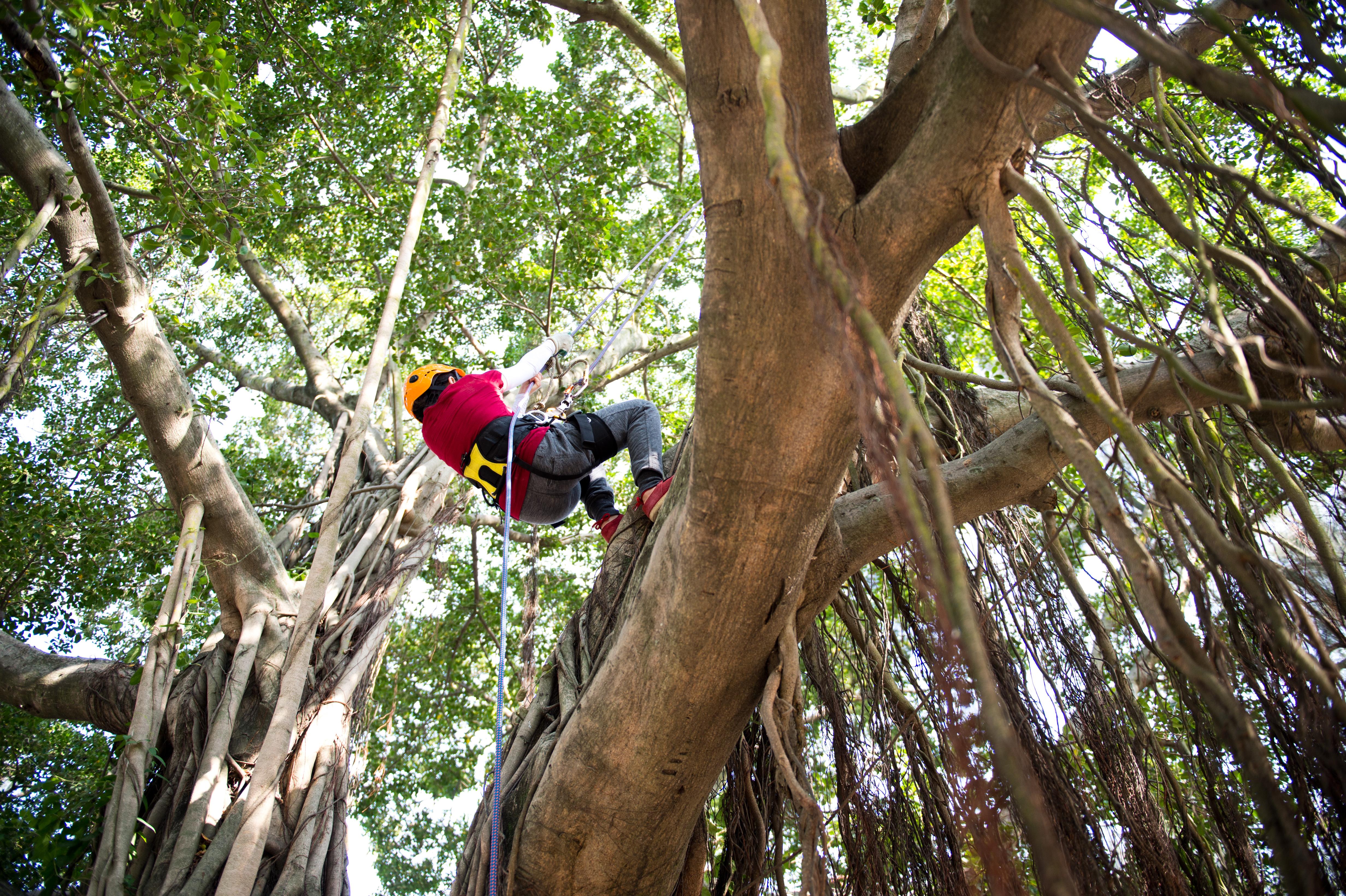 People adventure climbing high tree.